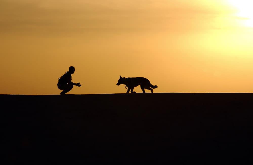 Pes a bežec